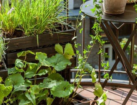 Náter pre kvetináče a nábytok na balkóne -vytvorenie mestskej oázy